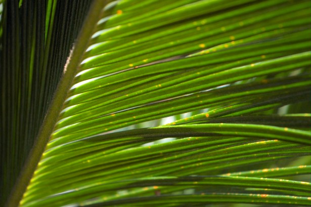 The Challenge of Palm Sunday